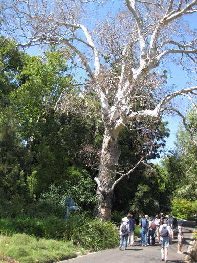 Separation Tree. Photo by Diane Tweeddale