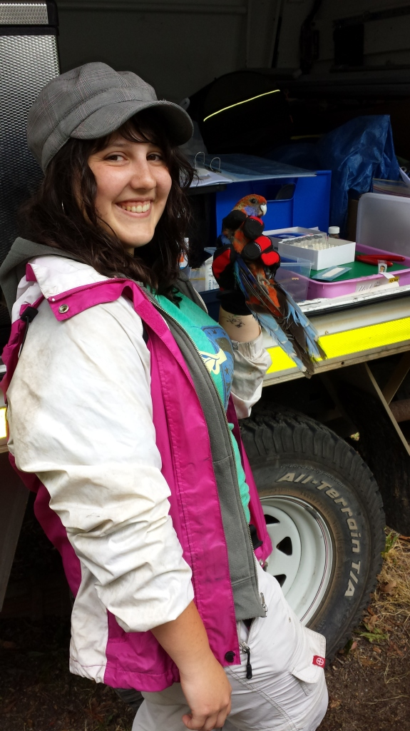 Eliza Larson with an adult Adelaide Rosella. Photograph by Sarah Micallef