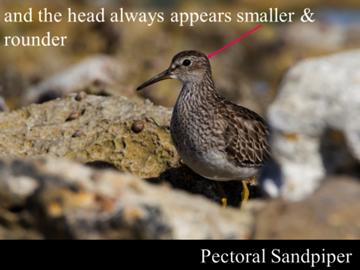 Sample slide. Photograph by John Barkla