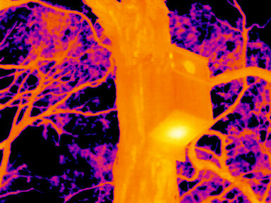 Thermal image showing heat lost by two nestlings