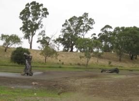 Dried ponds. Photographer: Diane Tweeddale