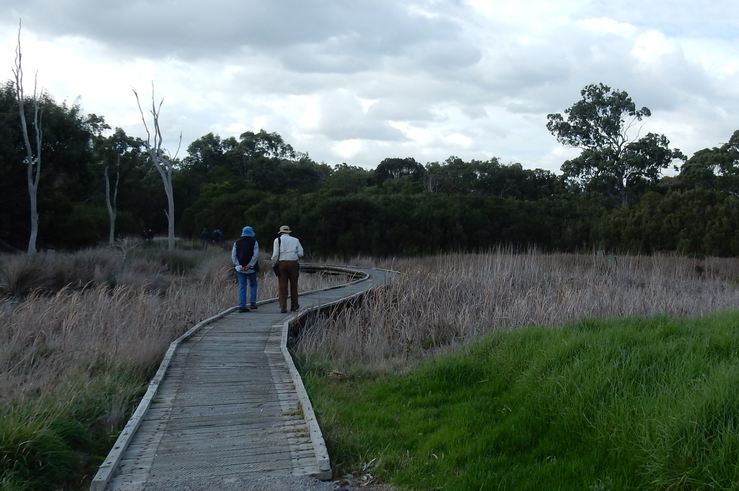 Crossing wetland by boardwalk - D Tweeddale