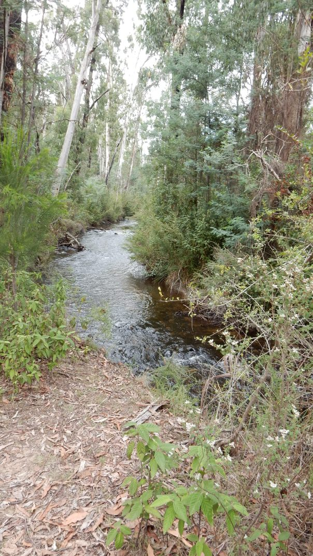 Murrindindi River - Diane Tweeddale