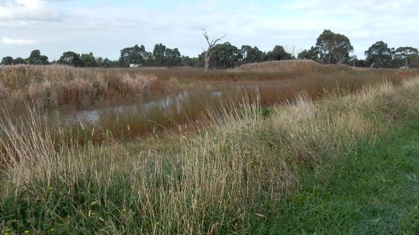 Wetland - D Tweeddale