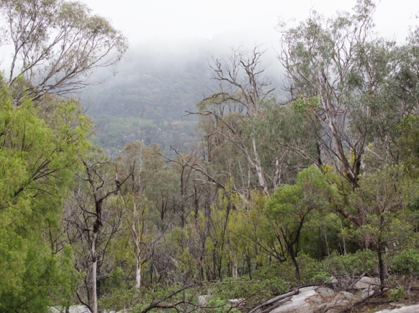 View from Valley Picnic Ground YY 2016 06 04 0632 800x600 M Serong
