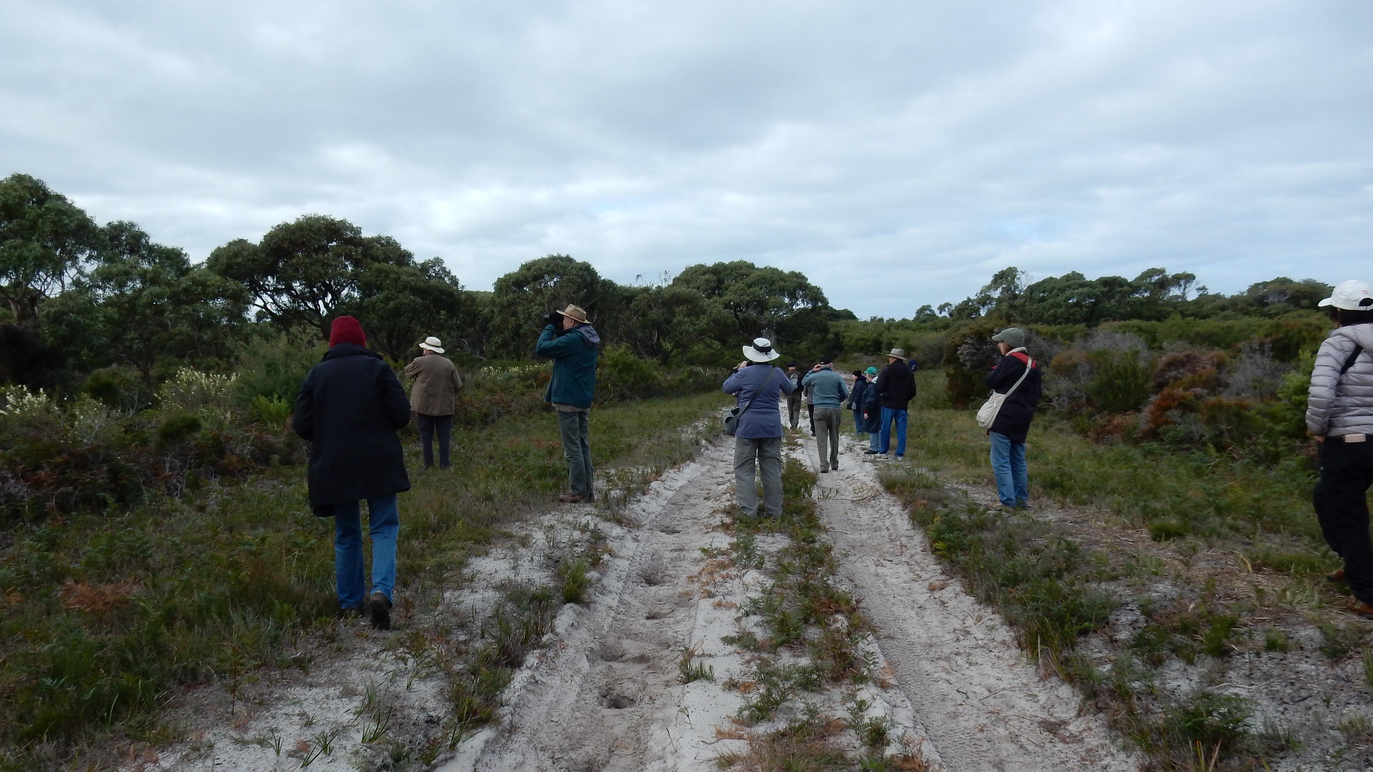 Walking the heathland track - Tweeddale