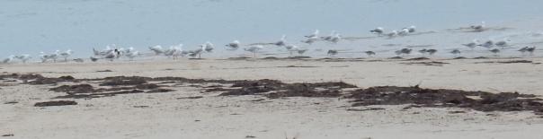 Birds at edge - D Tweeddale