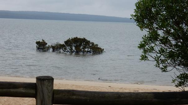Mangrove 1 - D Tweeddale