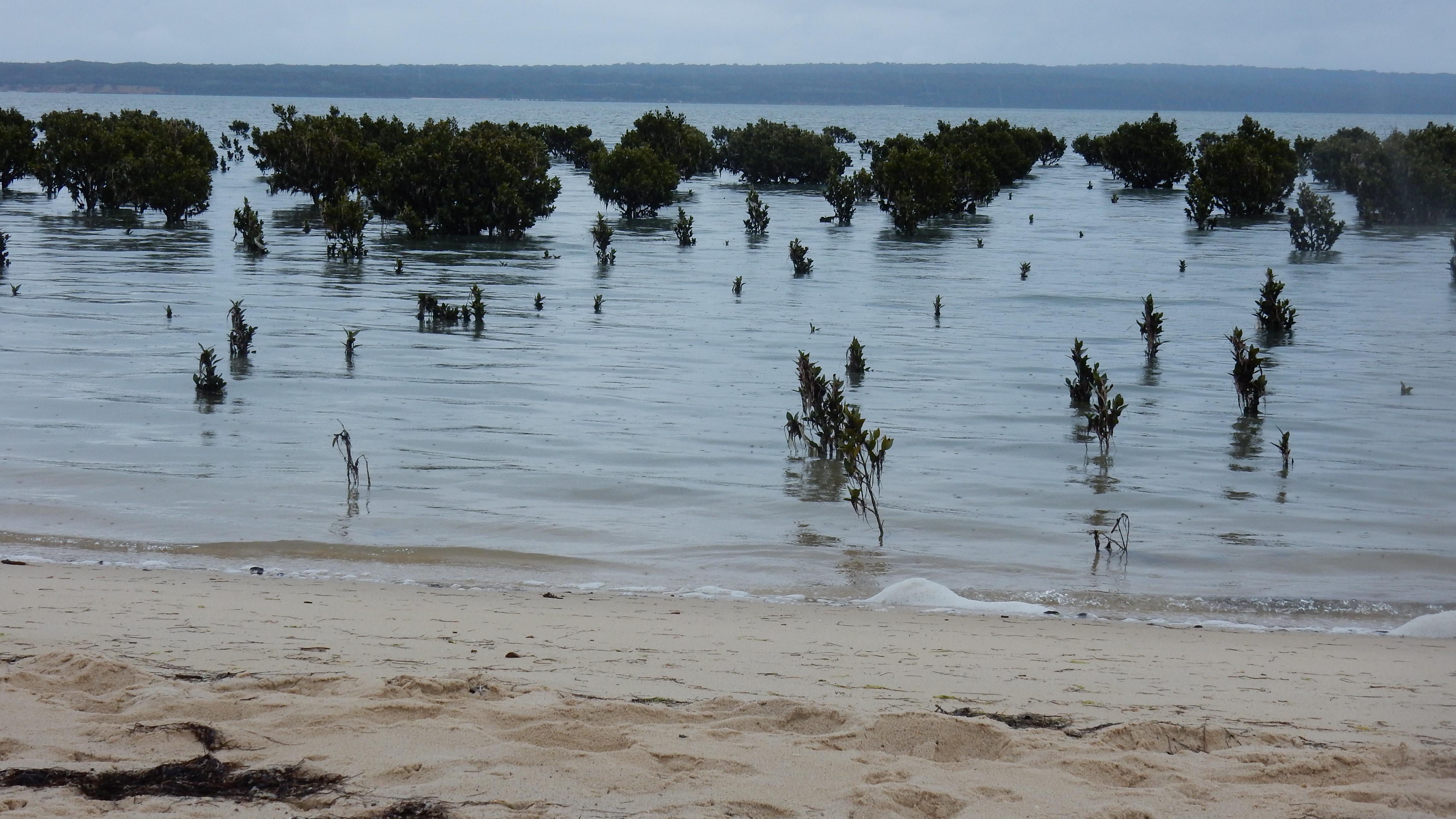 Mangrove 2 D Tweeddale