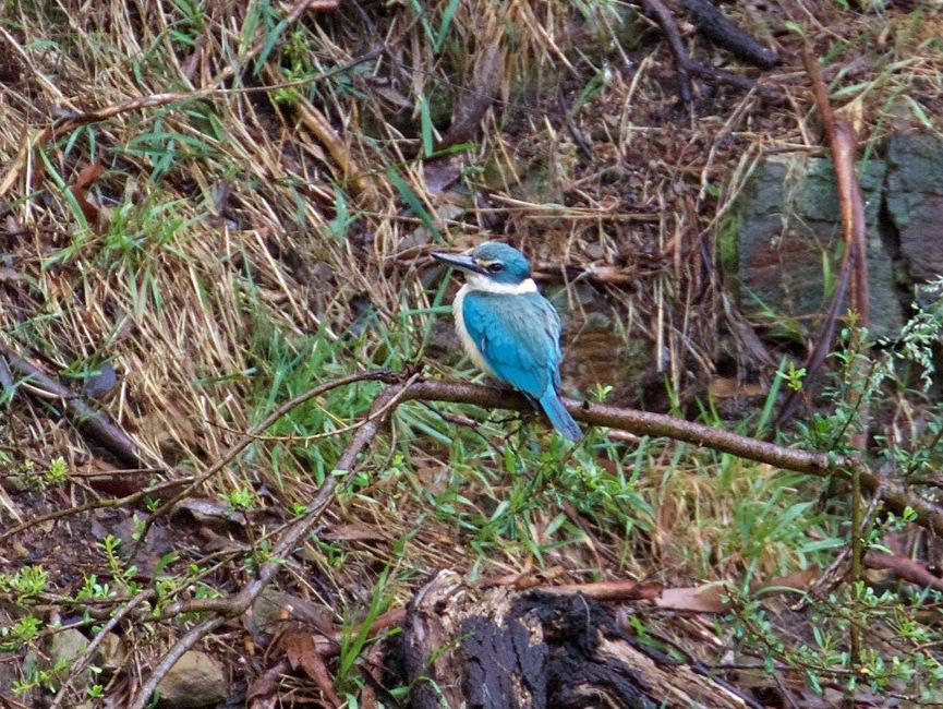 Sacred Kingfisher Pound Bend